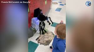 'Fearless' toddler fights off <b>spider decoration</b> at Illinois <b>Halloween</b> ...