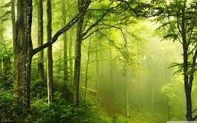 Beautiful Green Forest Ultra HD Desktop ...