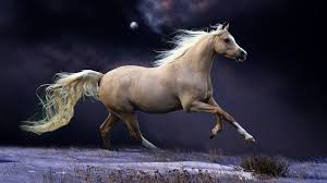 beautiful horses running wallpaper. Beautiful Horses Running Wallpapers Images With HD Wallpaper And Pinterest