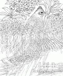 Find thousands of free and printable coloring pages and books on coloringpages.org! Super Hard Coloring Pages For Adults Colouring4u 78936 Hard Coloring Pages For Boys Bird Coloring Pages Abstract Coloring Pages