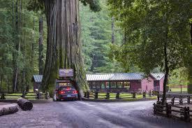 the drive thru tree in leggett