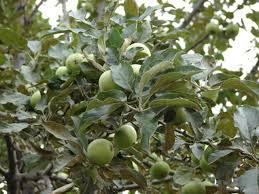 When Do You Spray Apple Trees And With What Chemicals  HunkerWhen Do You Plant Fruit Trees
