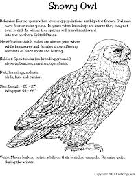Small Picture 38 best Arctic Snowy Owl images on Pinterest Snowy owl DIY