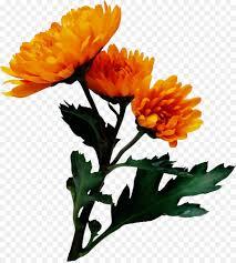 Marigold Floral Design Pot Marigold Flower Chrysanthemum Floral Design Image
