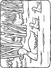 Eendjes In Het Water Kiddicolour
