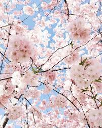 Pastel Spring Flowers Wallpapers - Top ...