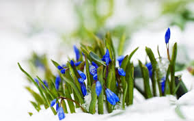 Image result for flowers in the snow