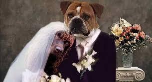 Psst Wie Deine Videobotschaft Zum Highlight Jeder Hochzeit Wird
