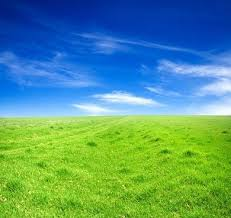 grass and sky backgrounds. Grass Sky Picture 5 And Backgrounds All-free-download.com