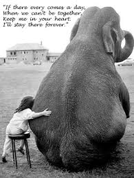 Elephant Quotes Enchanting 48 Inspirational Elephant Quotes You Need Right Now Quan Jewelry