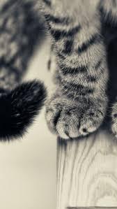 cat wallpaper iphone 5. Beautiful Cat And Cat Wallpaper Iphone 5 B
