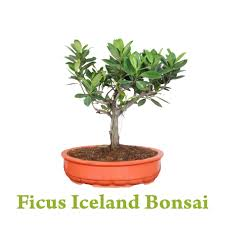 Greenish : Gift that Grows   Green Plants Gifts   Send Plants for Special  Occasion   Best in Delhi NCR