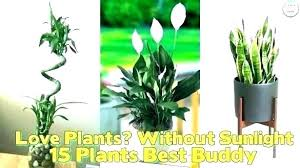 Small plant for office desk Low Light Small Office Plants Small Indoor Plants For Office Top Best Small Indoor Office Plants Small Indoor Philssite Small Office Plants Construsinuco