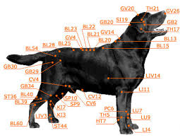 Canine Trigger Point Chart Dog Acupressure Not Acupuncture Resources Lucky Dog Health
