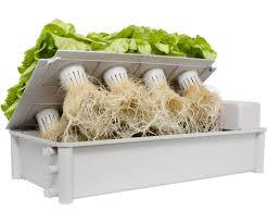 salad box hydroponic salad garden kit