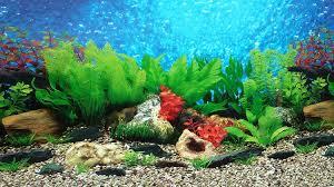 Aquarium Background Pictures Aquarium Backgrounds Under Fontanacountryinn Com