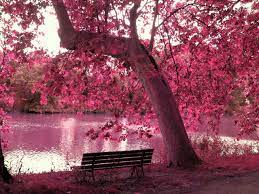 Pink Nature Trees Wallpapers ...