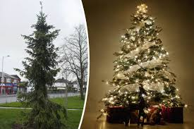 Worst Christmas Tree Ever Meet U0027the Twigu0027  Daily StarWorst Christmas Tree
