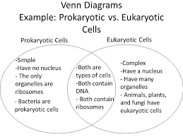 Compare Prokaryotic And Eukaryotic Cells Venn Diagram Bellringer How Many Parents Are Involved In Sexual