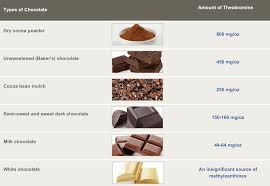 Is Chocolate Bad For Dogs What About Cats Find Out Now
