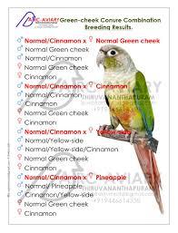 Green Cheek Conure Combination Breeding Results Conure
