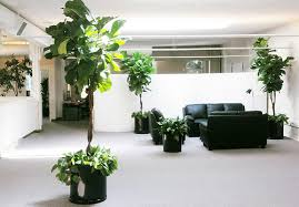 office feng shui plants. In Feng Shui, Adding Plants To Your Office Can Help Bring You Closer Nature Shui E
