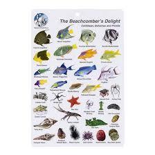 I Trident 'n Dip - Fish Card Delight Beachcombers Dive d
