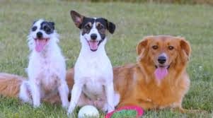 list of hybrid dogs their unusual mixed breed names