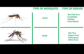 Mosquito Chart Type Chart Edit Green Strike