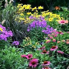 qvc garden plants post uk cottage qvc garden
