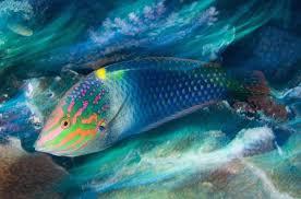 أكبر تجميع لأجمل صور من اعماق البحار (سبحان الله الخالق العظيم) Images?q=tbn:ANd9GcRgy-39x3J6Z3zMf3XvaCVX8LJKNgS3apbGNHQtG6Zr0-nLwtet