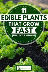 edible plants that grow fast healthy