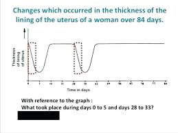 Uterine Wall Fluzo Info