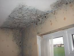 Fabulous Mould Bedroom Ceiling Mold On Celing With Black Mould On Ceilings  In Bedrooms