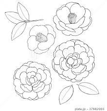 椿の花素材線画のイラスト素材 37882003 Pixta