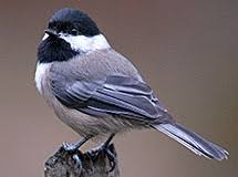 Chickadees and Nuthatches | Oregon Department of Fish & Wildlife