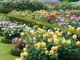 Small Picture The 26 best images about Roses on Pinterest