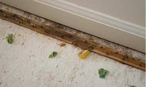 carpet joining strip. cut the new pad down to 4\u0027 by 2\u0027 section. you don\u0027t have tape or adhere down, but stapling wood subfloor ensure carpet joining strip