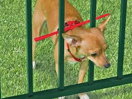 invisible fence for small dogs. Small Dog Fence 7 Things To Consider When Getting A . Invisible For Dogs
