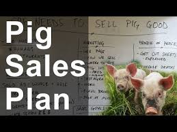 Pig Farming Business Plan Pig Farming Business Plan In The Philippines Benefited Focus Cf