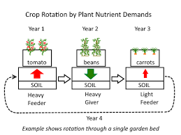 Crop Rotation Systems For Annual Vegetables Deep Green