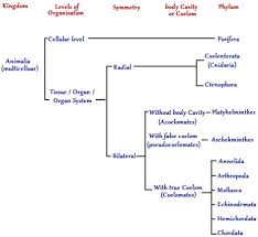 65 Rational Animal Scientific Classification Chart