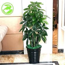 decorative plants for office. Decorative Plants For Office Related Post Crossword N