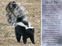 Small Picture Jimmy Skunk Striped Skunk Facts Activities Books Photos and