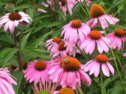 flowers for garden. Flowers. SummerGarden08 045 Flowers For Garden
