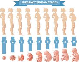 Pregnancy Month By Month Hunterdon Healthcare