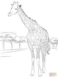 Free Coloring Pages For Kids Giraffes With Beautiful Giraffe