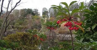 「目白庭園 画像 無料」の画像検索結果