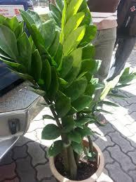 office feng shui plants. Feng Shui Plants For Office. Office L