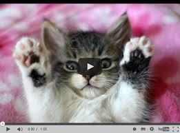 Lustige Katze Top 10 Katzen